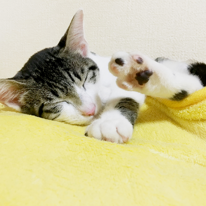 サーカディアン・リズムを意識した睡眠